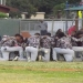 Norland players take part in pregame ritual.